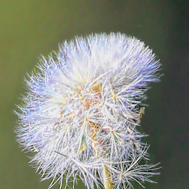 by Doreen Rutherford - Nature Up Close Other plants