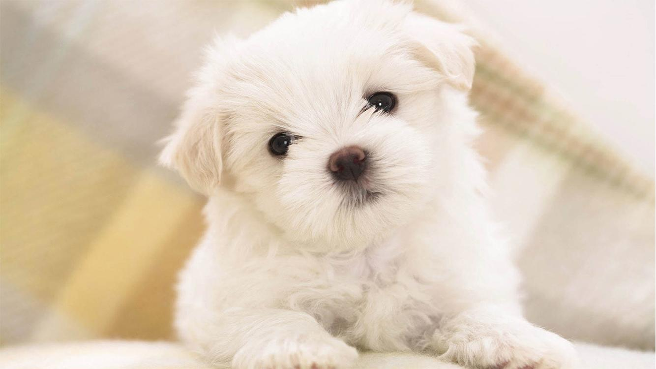Cute Pups Android Apps on Google Play