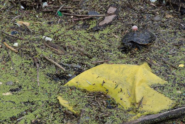 Fuga, l'astuta tartaruga :) di -Os-