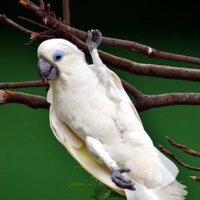 a bird workout by Roland Viado - Animals Birds ( workout, bird, jurong bird park )