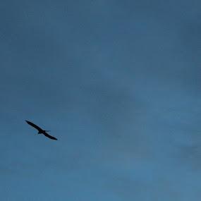 by Koyel Ghosh - Animals Birds