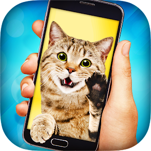 Cat Video Call Icon