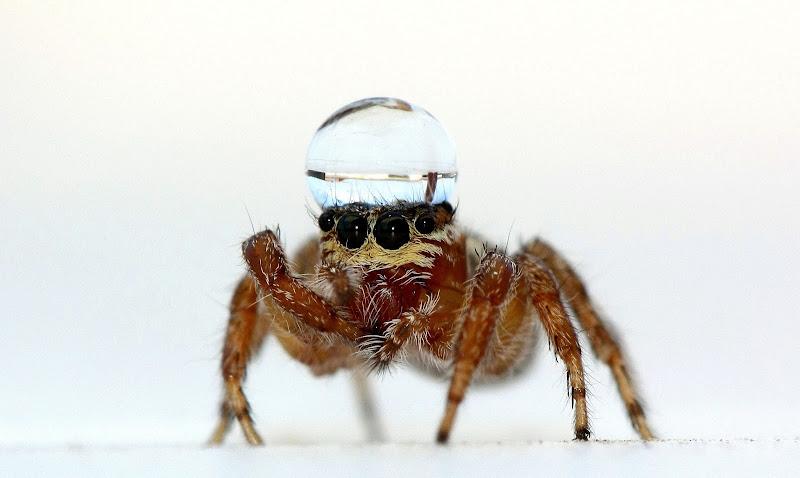Spider di marco_ridolfi