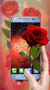 تنزيل Rose Wallpapers Hd ورود حمراء جميلة الصور 1 1 2 لنظام