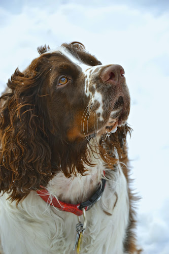 Marvelous Marley! by Nadine Harkness - Animals - Dogs Portraits ( , pwc84 )
