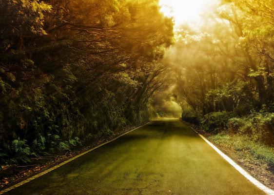 La strada nel bosco di GabrieleT