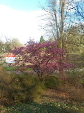 Photo: Rombergpark, 2.13.14