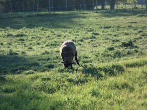 Photo: Y una oveja al lado