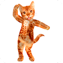 Dancing Talking Cat icon