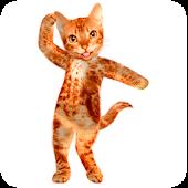 Dancing Talking Cat