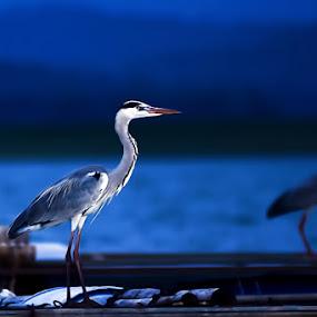 You do not imitate me by Timor Dedy Irawan - Animals Birds