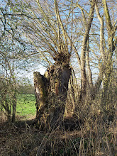Photo: Alte Bäume