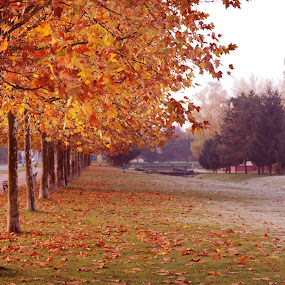 Autumn by Goran Gašparac - City,  Street & Park  City Parks ( school, park, grass, autumn, snow, trail, croatia, trees, zagreb, river )