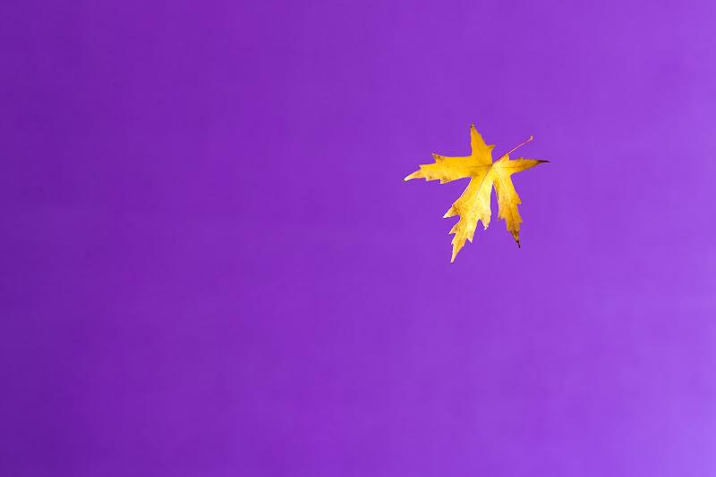 Purple and Gold di Rino Lio
