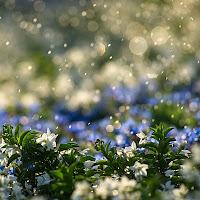 Acqua di primavera di