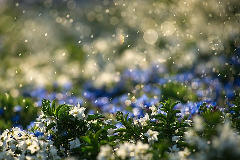 Acqua di primavera di Dariagufo
