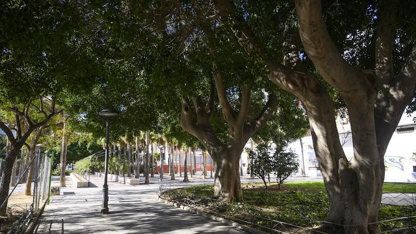 Almería cuenta con más de 52.000 árboles.