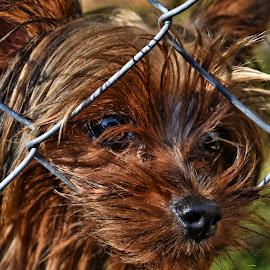 by John Geddes - Animals - Dogs Puppies