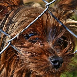 celine dogs  Oct 23 2017103aaa__rd.jpg