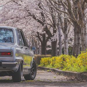 スカイライン  昭和46年 GTのカスタム事例画像 たけちさんの2019年04月13日22:53の投稿