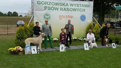 Zdjęcie: SORAYA Festina - V1, Zwycięzca Młodzieży, Najlepszy Junior w Rasie, Zwycięzca Rasy, BOG II, Junior BIS I