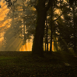 Morning, Maple Bay by Campbell McCubbin - Landscapes Forests ( sunrays, light, silhouette, rays, trees, morning )