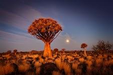 cactusachtige boom tussen lage begroeiing