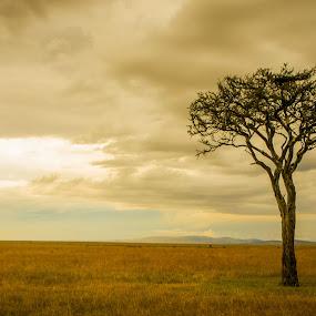 The Masai Mara by Ravi Patel - Landscapes Prairies, Meadows & Fields