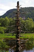 Photo: ... und trifft auch alte Baeume...