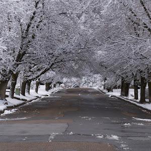 snowstreetnocar.jpg