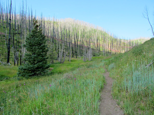 Sawmill Canyon trail