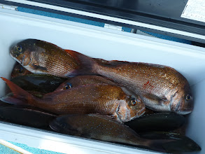 Photo: 本日のトップ賞!オオツさん!真鯛10匹、オナガ、イサキ・・・でした!
