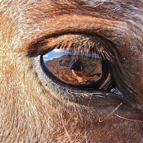 Cimmie  by Rose Smith - Animals Horses ( cimmie, horse, best, the, reflexion, ever,  )