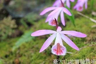 Photo: 拍攝地點: 梅峰-一葉蘭展示室 拍攝植物: 美麗一葉蘭 拍攝日期:2012_04_01_FY