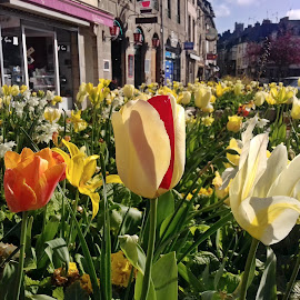 Spring in Lamballe by Ciprian Apetrei - Instagram & Mobile Android ( spring, tulips, city, mobile photos, brittany )
