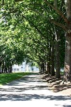 Photo: Year 2 Day 141 - Path in Carlton Gardens