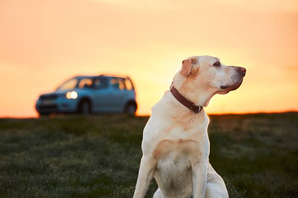Dog traveler stock photo