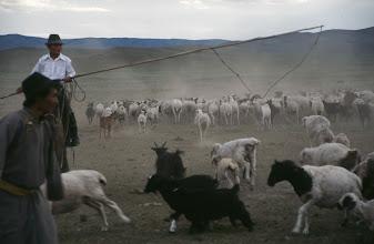 Photo: 03385 ブルド/ハスバター家/羊・ヤギの放牧