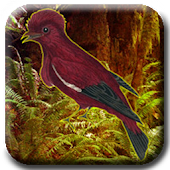 Save the Crimson Fruitcrow