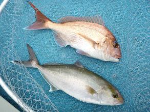 Photo: 真鯛とネリゴのコラボ!