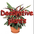 Decorative plants icon