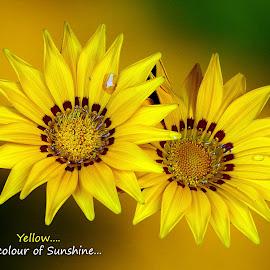 Yellow....  by Asif Bora - Typography Quotes & Sentences