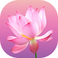 Flower Wallpapers and Backgrounds APK