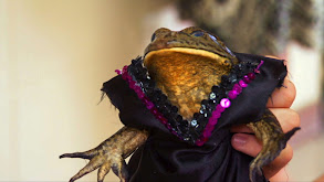 Frog Beauty Pageant thumbnail