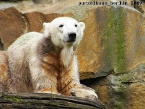 Photo: Hat geschmeckt, meint Knut :-)