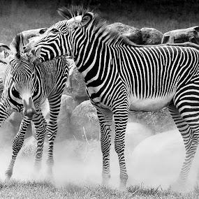 Zebra by Inger Wakolbinger - Animals Other