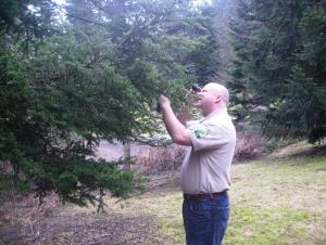 arborist-tree-care