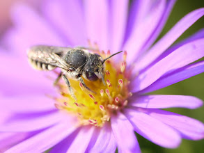 Photo: Covered in pollen