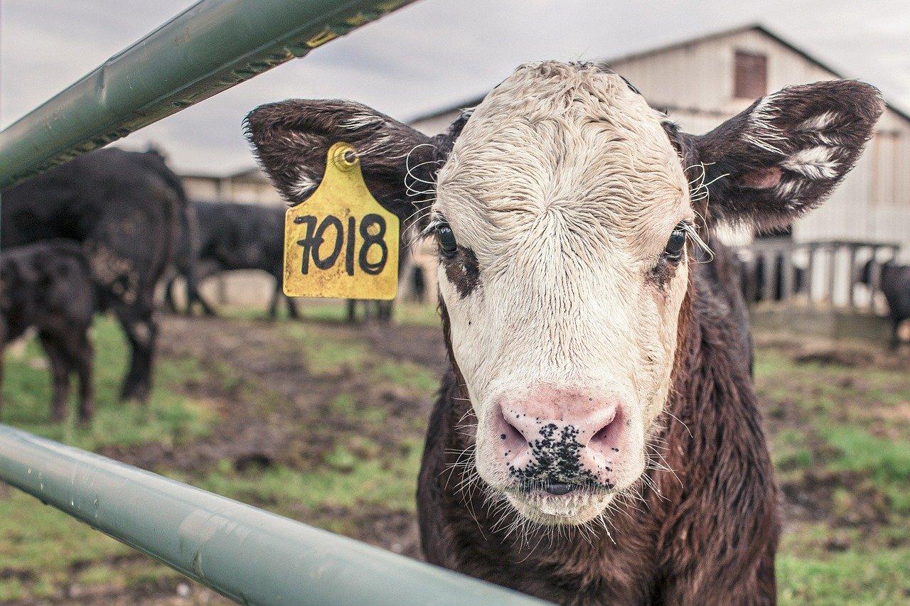 S.I.F. fiscaliza produtos de origem animal