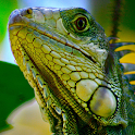 reptile wallpapers icon